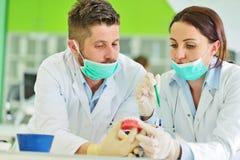Protesi dentaria, protesi dentarie, attività di protesi Mani di protesi mentre lavorando alla protesi dentaria Immagine Stock Libera da Diritti
