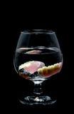 Protesi dentaria parziale in un bicchiere d'acqua Fotografie Stock Libere da Diritti