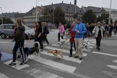 PROTEST RALLY DOG WALK AGAINST DOG LAW Royalty Free Stock Images