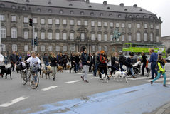 PROTEST RALLY DOG WALK AGAINST DOG LAW Stock Photo