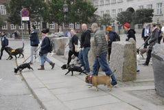 PROTEST-SAMMLUNGS-HUNDEweg GEGEN HUNDEgesetz Stockbilder