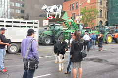Protesta canadese degli agricoltori di latteria Fotografia Stock