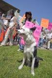 Protesta del UCLA Imagen de archivo libre de regalías