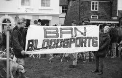 Protesta di caccia di Fox, Inghilterra Immagine Stock