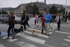 PROTESTEN SAMLAR HUNDEN GÅR MOT HUNDLAG Royaltyfria Bilder