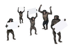 Protesting monkey Royalty Free Stock Photo