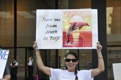 Protesto da caça do golfinho. Foto de Stock