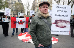 Protests against Canadian seal hunt Stock Images