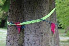 Protestuje przeciw usuwać dębowych drzewa pozwolić budowę parking samochodowy fotografia royalty free