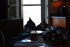 Protetor adorável Dogs foto de stock royalty free