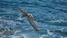 Protetor de costa Imagens de Stock