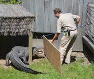 Protetor do jardim zoológico de Granby Fotografia de Stock