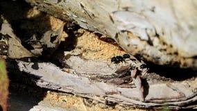 Protetores da família das formigas vídeos de arquivo