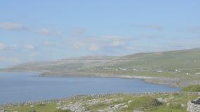 Protetto famoso burren il parco nazionale Irlanda - itinerario atlantico selvaggio del calcare di modo video d archivio