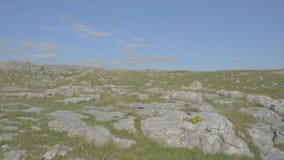 Protetto famoso burren il parco nazionale Irlanda - itinerario atlantico selvaggio del calcare di modo archivi video