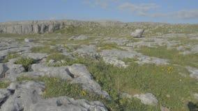 Protetto famoso burren il parco nazionale Irlanda - itinerario atlantico selvaggio del calcare di modo stock footage