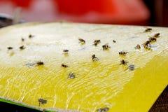 Protezione dalle mosche su alimento Fotografia Stock