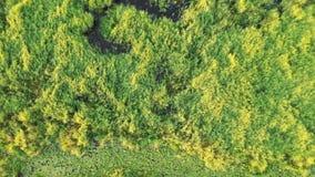 Protezione dell'ambiente Sorvolare foresta ed il paesaggio verdi della palude Vista aerea dal fuco stock footage