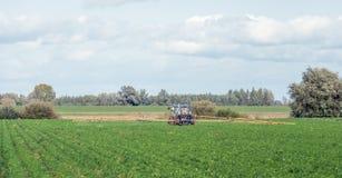 Protezione dell'impianto nei raccolti di verdure Immagine Stock Libera da Diritti