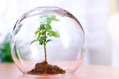 Protezione della pianta Immagine Stock