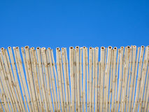 Protezione di bambù del sole del compagno della canna Cielo blu nel fondo Immagini Stock Libere da Diritti