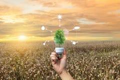 Protezione di concetto e piantatura ecologiche di riscaldamento globale di siccità fotografia stock