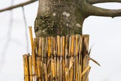 Protezione di giovane albero durante la stagione invernale Immagini Stock Libere da Diritti