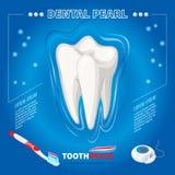 Protezione isometrica dal concetto dentario della perla illustrazione vettoriale
