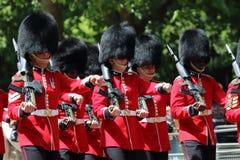 Protezione reale britannica Fotografia Stock Libera da Diritti