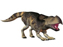 Protoceratops Royalty Free Stock Photo