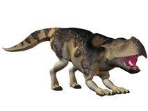 Protoceratops Royalty Free Stock Photo