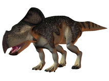 Protoceratops. 3D Render of an Protoceratops-3D Dinosaur Royalty Free Stock Images
