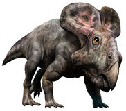 Protoceratops Stock Photos
