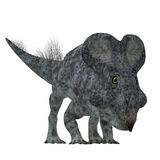 Protoceratops Dinosaur on White. Protoceratops was a herbivorous Ceratopsian dinosaur that lived in Mongolia in the Cretaceous Period Stock Photo