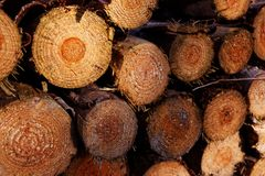 Protokollierungsindustrie - Stapel von frisch gehackten Baum-Stämmen stockbilder
