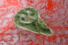 Protozoario del lamblia del Giardia que causa el ejemplo de la representación de la enfermedad 3D de la giardiasis Fotos de archivo