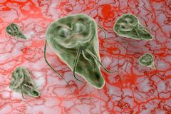 Protozoario del lamblia del Giardia que causa el ejemplo de la representación de la enfermedad 3D de la giardiasis Imagenes de archivo