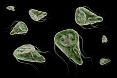 Protozoario del lamblia del Giardia que causa el ejemplo de la representación de la enfermedad 3D de la giardiasis Foto de archivo