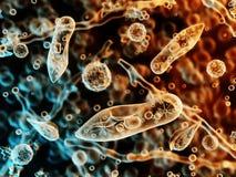 Protozoen, Infusoria unter einem Mikroskop lizenzfreie stockfotografie