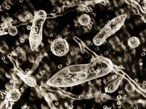 Protozoen, Infusoria unter einem Mikroskop lizenzfreie stockfotos