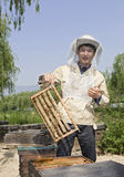 Protrait of a man beekeeper royalty free stock photography
