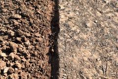 Protuberância da palha e do solo no campo do arroz antes do arroz da planta foto de stock royalty free