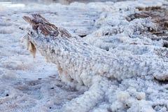 Mar Morto - haste de sal foto de stock  Imagem de calmo - 30031580