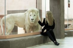 Proud beast. White Lion. In the zoo Royalty Free Stock Images