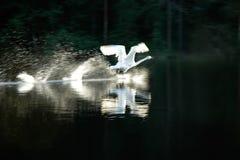 Proud Bird Royalty Free Stock Photography