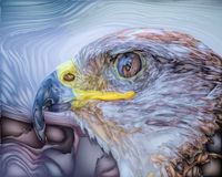 Proud Bird Eagle. Eagle head close up. Vector bird graphics, illustration of an eagle head royalty free illustration