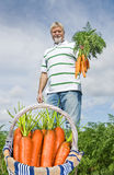 Proud carrot farmer picking fresh carrots Stock Images
