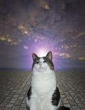 Proud Cat Royalty Free Stock Photo