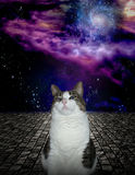 Proud Cat. With space background stock illustration