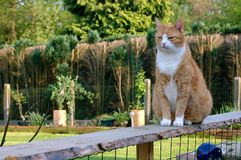 Proud cat on fence. Royalty Free Stock Image
